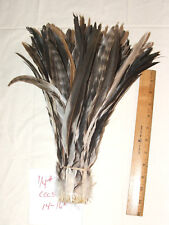 "Rooster Tail Feathers Chinchilla Strung Coque 1/4 pound 14-16"" length"