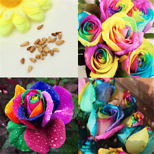 600X Magic Rainbow Rose Colorful Flower Seeds Planting Garden Plant Decor NEW