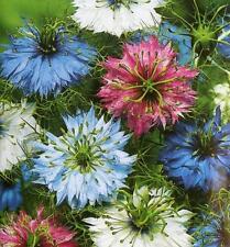 LOVE IN A MIST 'Persian Jewels' 100 seeds flower garden