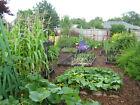 26,200 Seeds 22 Varieties SURVIVAL EMERGENCY HEIRLOOM NON GMO VEGETABLE SEED PKG