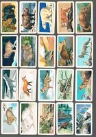 1962 Brooke Bond Animals of North America Trading Cards Complete Set of 48