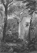 BRAZIL. Forest. Rhind Flora Fauna Man shooting 1872 old antique print picture