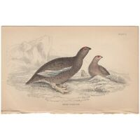Jardine/Lizars antique hand-colored engraving bird print Pl 2 Rock Ptarmigan