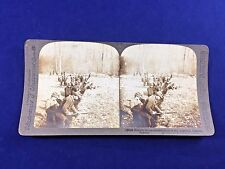 Underwood WWI Stereoscope Card Argonne District #12026 French troops entrenching