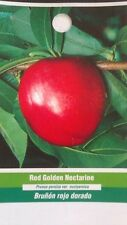 4'-5' Red Golden Nectarine Tree Live Healthy Fruit Trees Plant New Home Garden