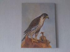 Gemälde,Öl auf Leinwand,Tiere,Vögel,Falke