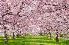 1000Piece Jigsaw Puzzle Cherry Blossom Hobby Home Decoration DIY