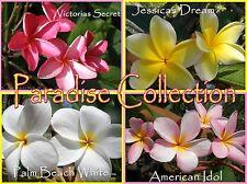 Rare & Exotic *Paradise* Collection 4 Plumeria Frangipani Hawaiian Lei Cuttings