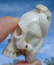 Schädel mit Schlange , skull aus Horn geschnitzt memento mori Wunderkammer !