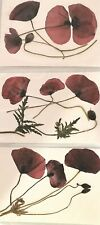 Pressed Natural Red Wild Poppy Flowers