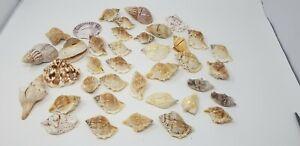 Wedding place card holders Beach ocean nautical shells
