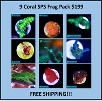 Live 9 Piece SPS Coral Frag Pack FREE Shipping (Saltwater) Large Frags
