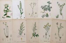 Engraving Botanical Art Prints