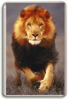 Lion Fridge Magnet 01