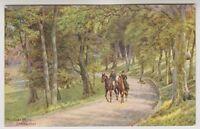 Sussex (East) postcard - Paradise Drive, Eastbourne - ARQ No. 905