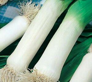 Leek musselburgh -approx 300+ seeds-free post-allotment-garden-vegetable