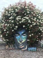 Photograph of the Prince Rogers Nelson blossom flower mural