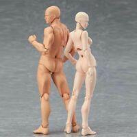 USA CHAN&KUN Movable PVC Male Female Figure Body Model Toy S.H. Figuarts
