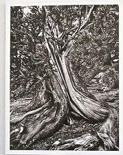 Sebastiao Salgado Print   Ancient Bristlecone,  Pine Forest,  USA 13x10