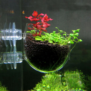 2 pcs Hanging Planter Glass Pot Holder for Aquarium Aquascaping   Tank