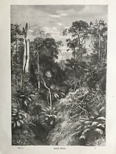 1861 Antique Print; View of Virgin Forest, Australia.