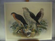 """""""la storia degli uccelli d'Europa"""" Set di 24 Stampe litografiche"""