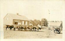 c1910 RPPC Postcard; Cedar Lawn Farm, C.P. Campbell, Stock Cattle, Jersey Cows?