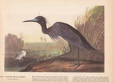 "1942 Vintage AUDUBON BIRDS #307 ""LITTLE BLUE HERON"" LOVELY Color Art Plate Litho"