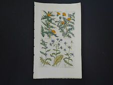Sir John Hill, Botanical, The Vegetable System 1761-1775 Gold Thistle #21