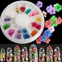 36Pcs Dried Flower Nail Art Tips Make Up Practice UV Gel Acrylic Decoration DIY