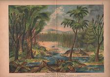1878 lithographie originale dinosaures archegosaurus reptiles gravure