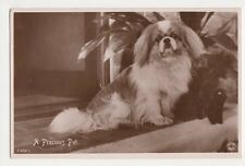 Dogs, A Precious Pet, Rotary Real Photo Postcard, B359