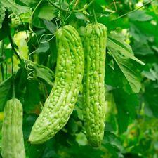 25 Bitter Melon ,Bitter Gourd seeds, Balsam Pear, Ku Gua, Foo Gwah, Kho Qua F1