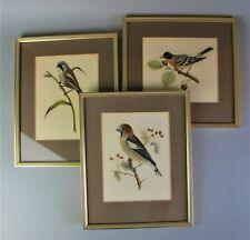 More details for superb set of 3 framed vintage bird prints by l.m. mulland 19th century gouache.