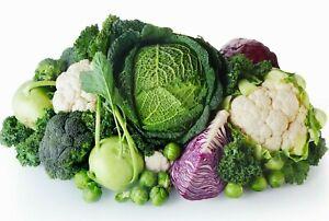 Organic Vegetable Plug Plants x6 Packs - Many Varieties! Peat Free Garden Ready