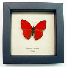 Real Framed I Love You Red Heart Butterfly Display Free Shipping 397
