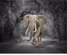Gray & Brown Home Decor Elephant Wall Art Photo Print B&W Matted Picture