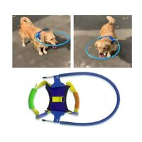 Pet Dog Safety Halo Harness For Blind Collide Wall Protector Vest Ring Collar US
