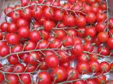 CHAMGAGNE CHERRY TOMATO  20 SEEDS! COMB.S/H OVER 150 TOMATOES IN OUR STORE!