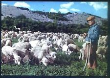 CPA France Provence Costume Folklore Tracht Trachten Traditional Sheep Tiere 36