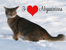 Abyssinian Cat Fridge Magnet, I Love Abyssinians