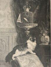 Henriette RONNER (1821-1909) La tentation chat oiseau gravure vers 1880