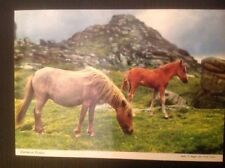 Devon Posted Collectable Animal Postcards
