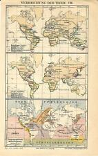 Carta geografica antica ANIMALI NEL MONDO Tav. 8 1890 Old antique map