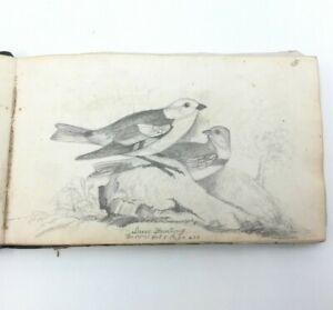 1852 JT GRIMSHAW Antique Art Sketchbook Bird Drawings 19th Century Signed JTG