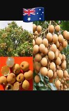 10x longan fruit Seeds Plant Garden Australian Stock