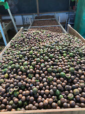 Organic Hawaii Grown-Raw Macadamia Nuts in Shell (Free 1/2 Lb )-11 lbs