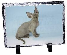 Blue Grey Devon Rex Kitten Cat Photo Slate Christmas Gift Ornament, AC-175SL