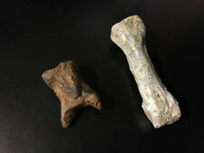 Special Bundle Pack: Giant Human Tooth / Giant Finger Bone