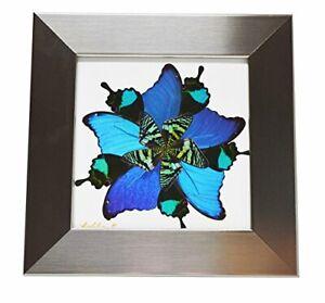 Eydelia - Butterfly Wing Wall Art - Star - Blue & Green